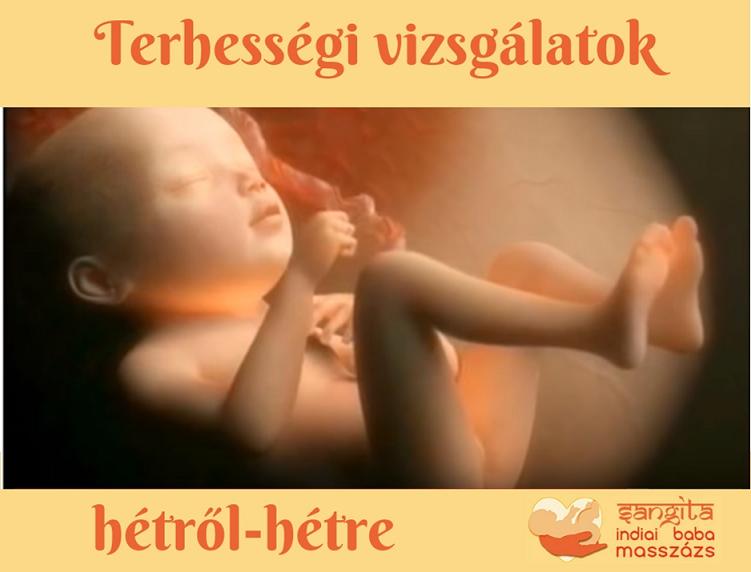 A terhességi vizsgálatok sorrendje hétről hétre